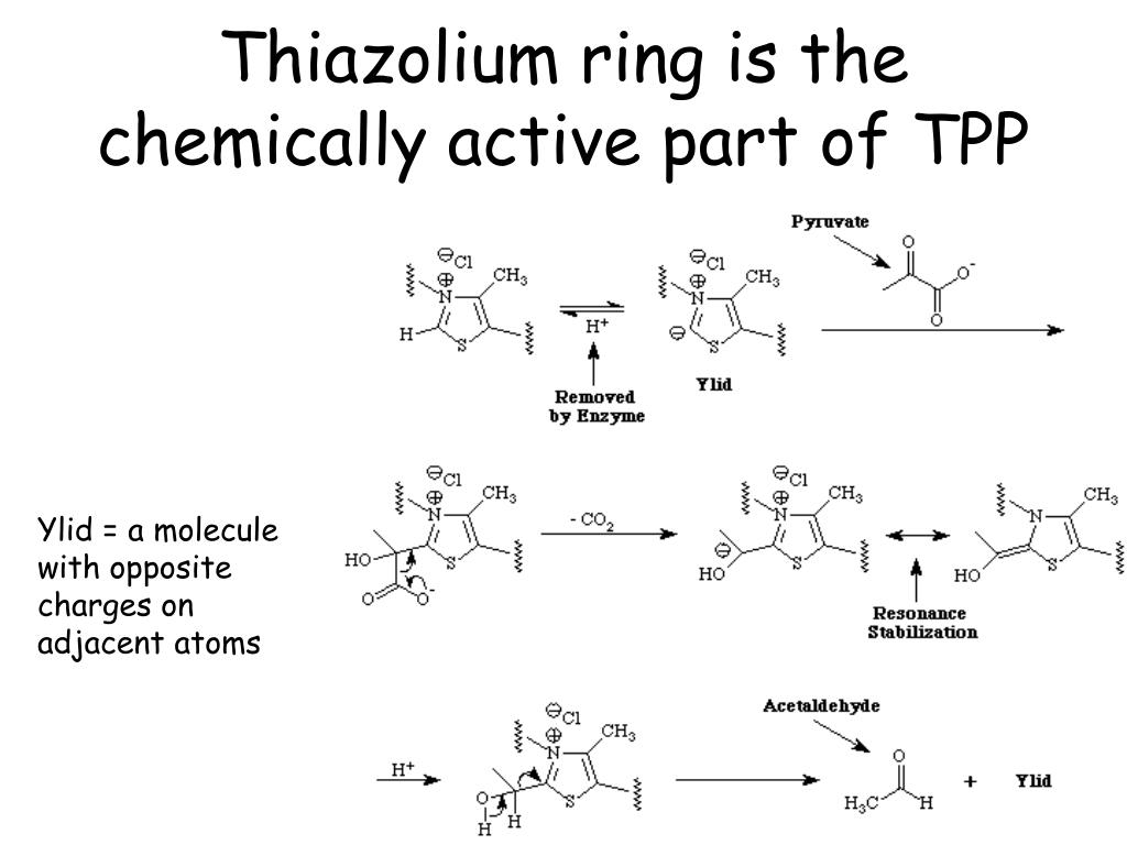 Thiazolium ring is the chemically active part of TPP