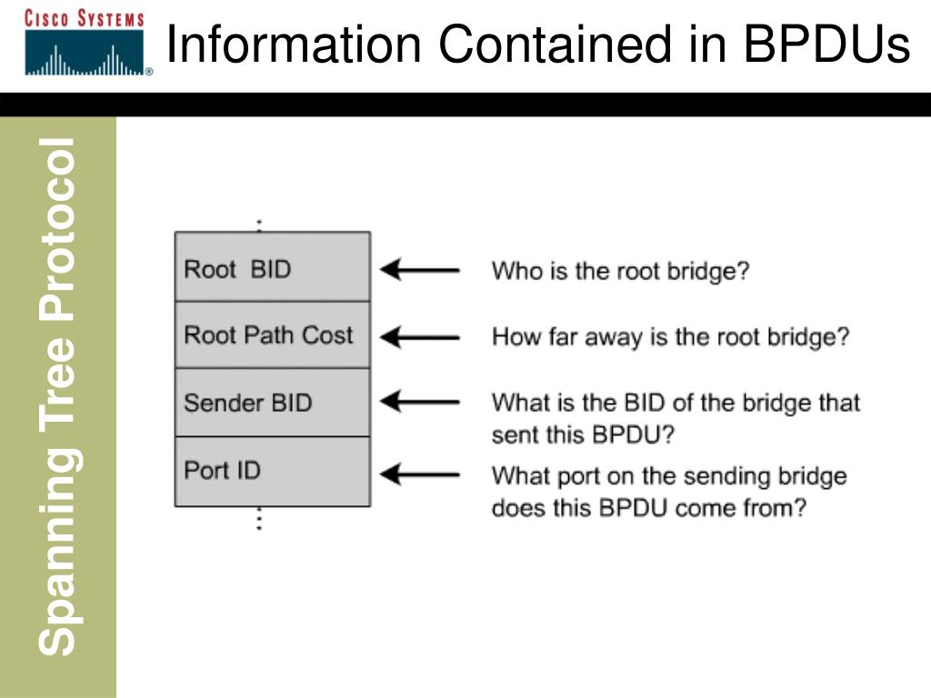 Information Contained in BPDUs
