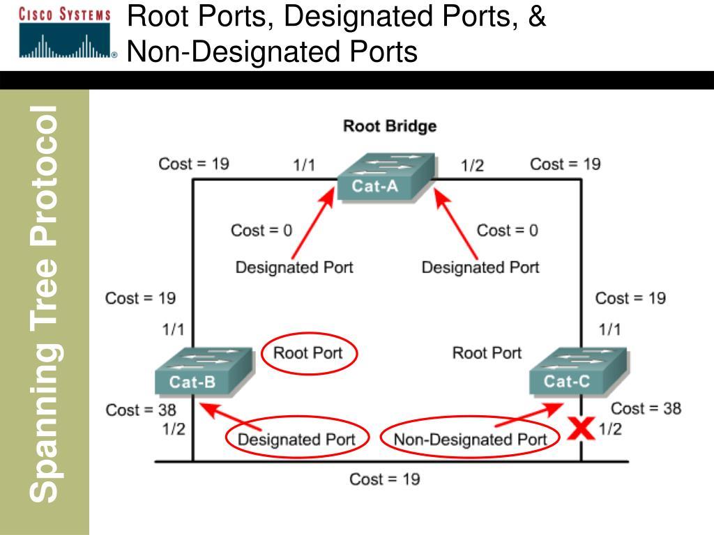 Root Ports, Designated Ports, &            Non-Designated Ports