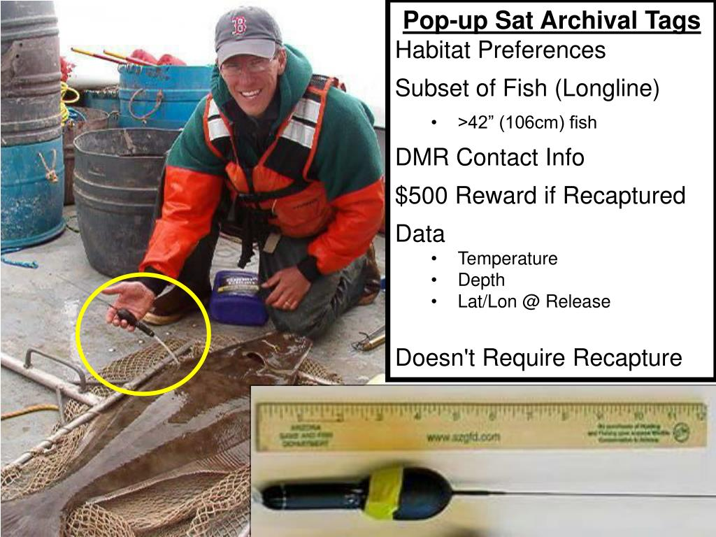 Pop-up Sat Archival Tags