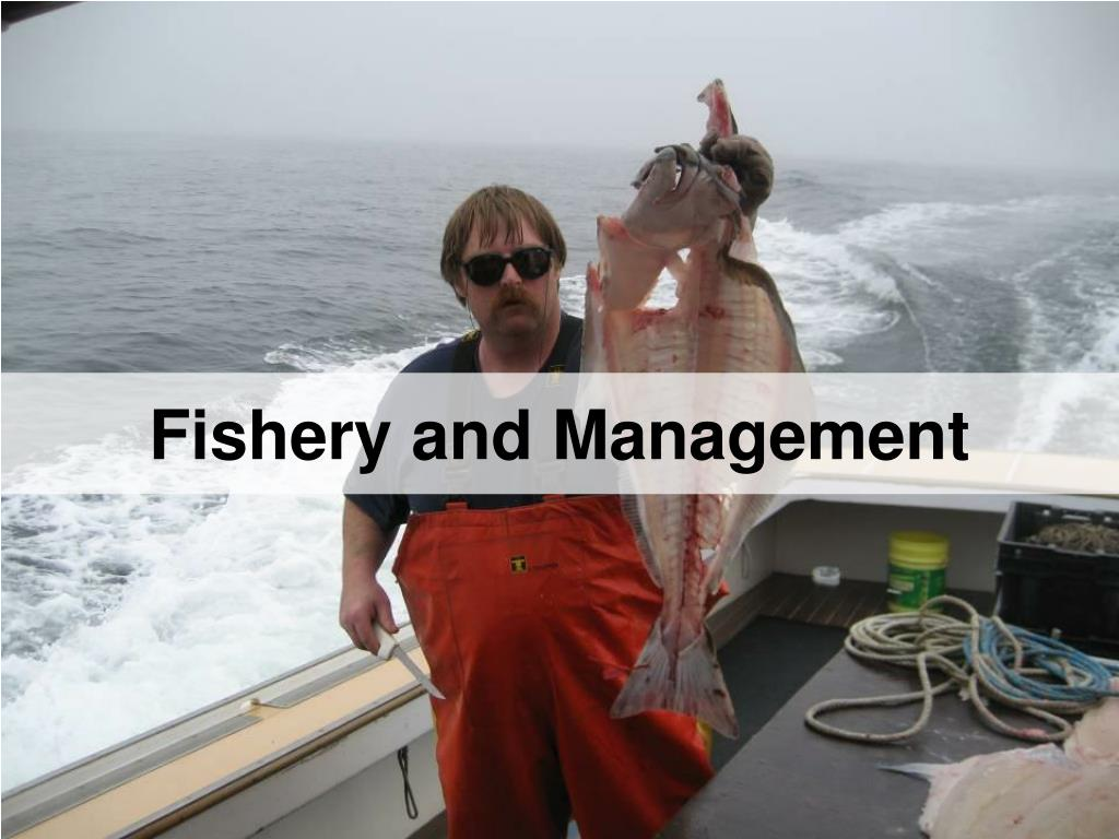 Fishery and Management