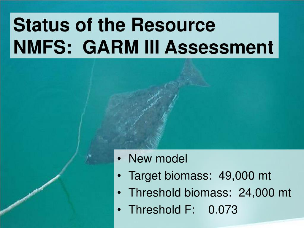 Status of the Resource NMFS:  GARM III Assessment
