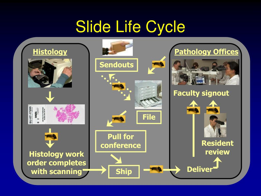 Slide Life Cycle