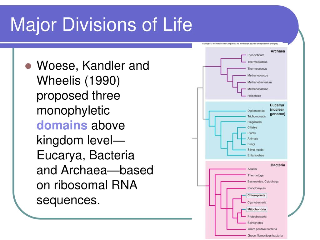 Major Divisions of Life