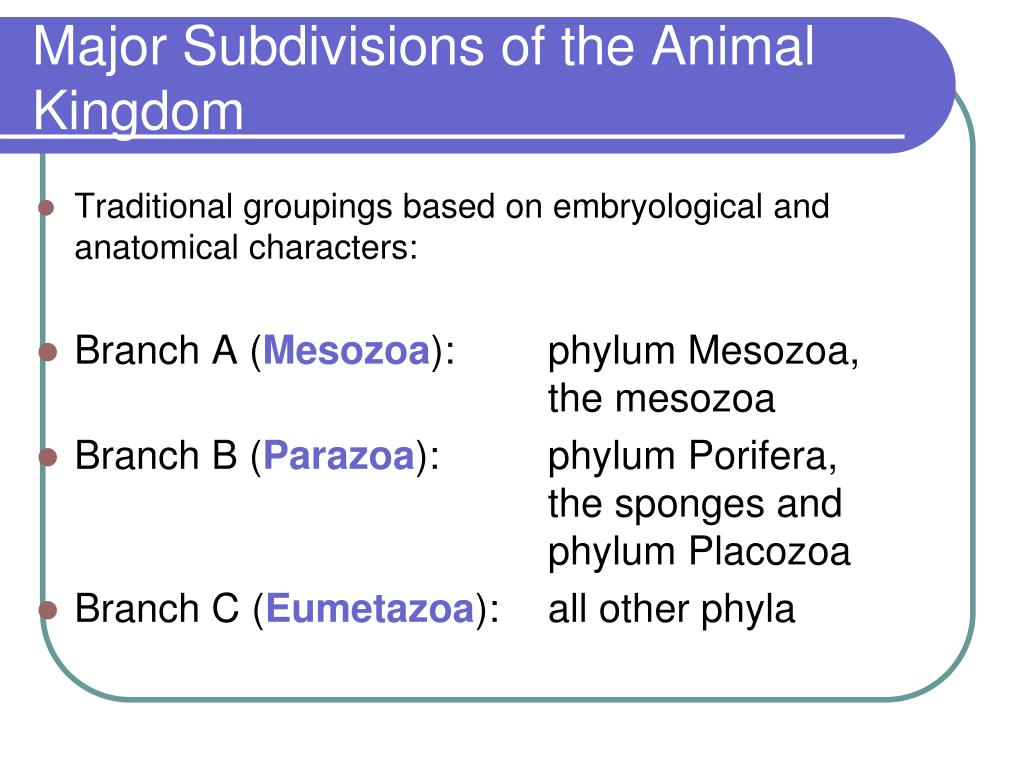 Major Subdivisions of the Animal Kingdom