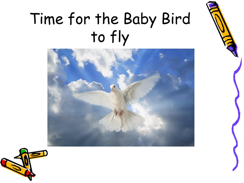 Time for the Baby Bird to fly