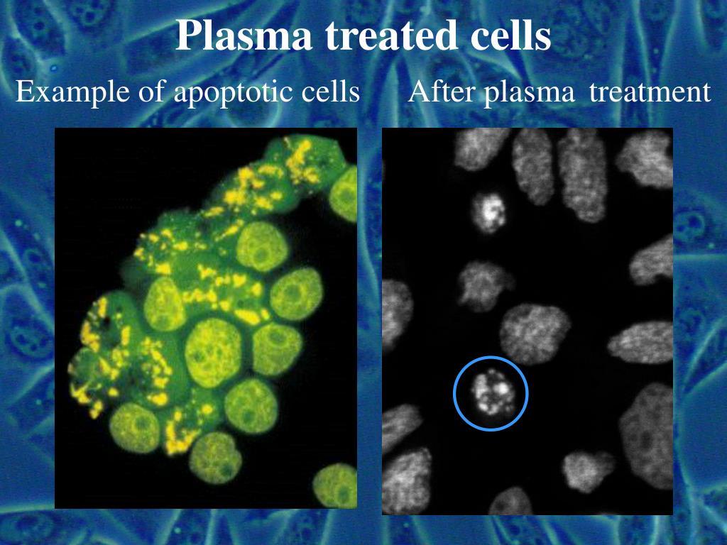 Plasma treated cells