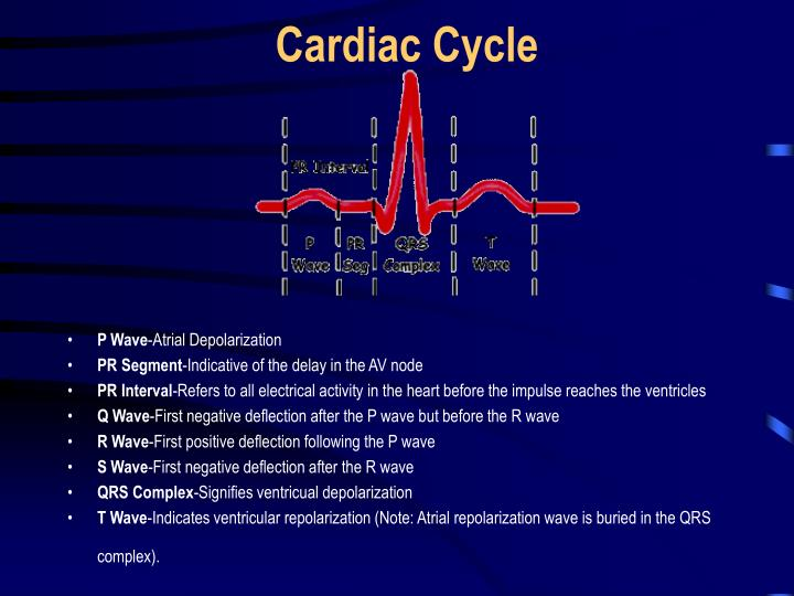 Cardiac cycle l.jpg
