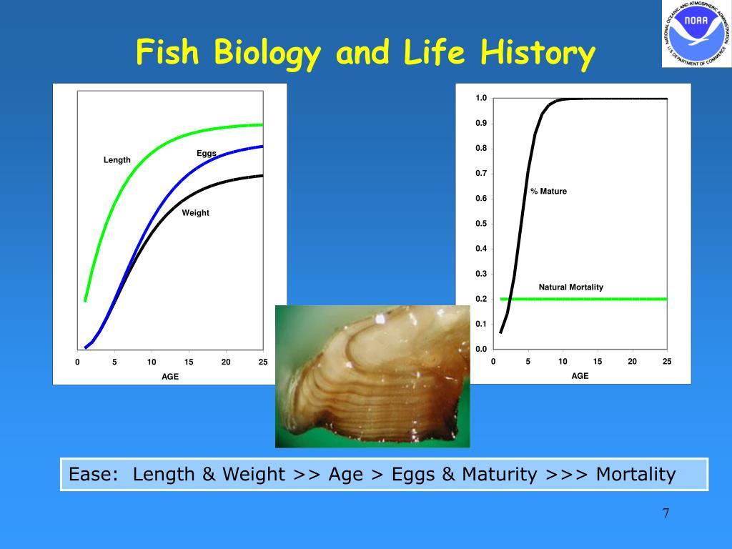 Fish Biology and Life History