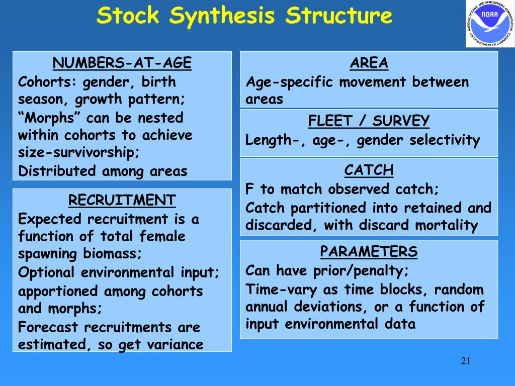 Stock Synthesis Structure