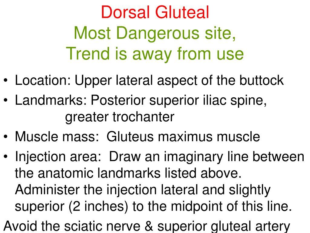 Dorsal Gluteal