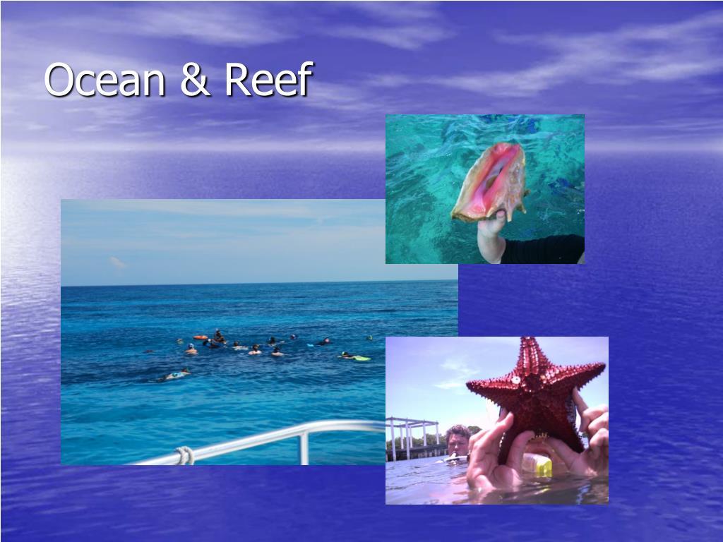 Ocean & Reef