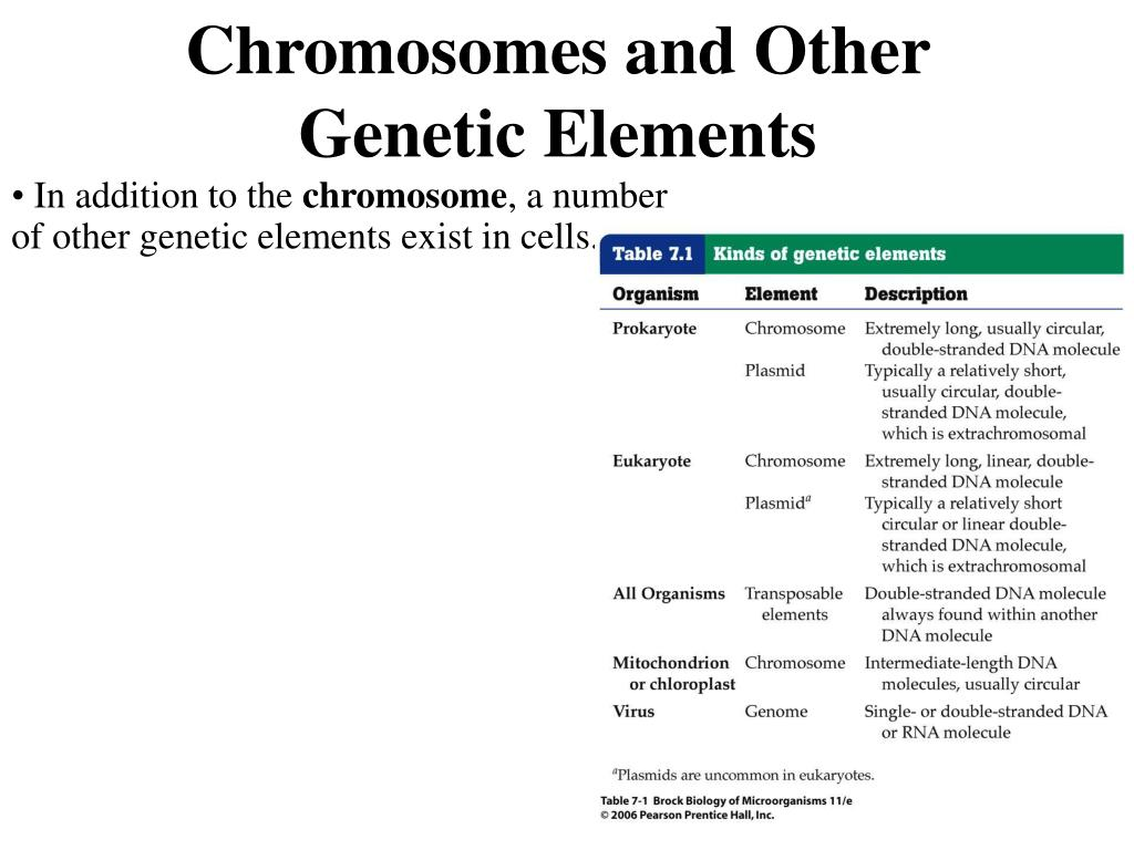 Chromosomes and Other Genetic Elements