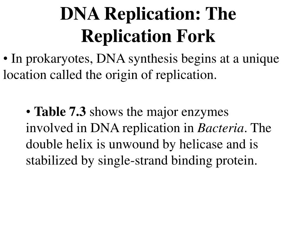 DNA Replication: The Replication Fork