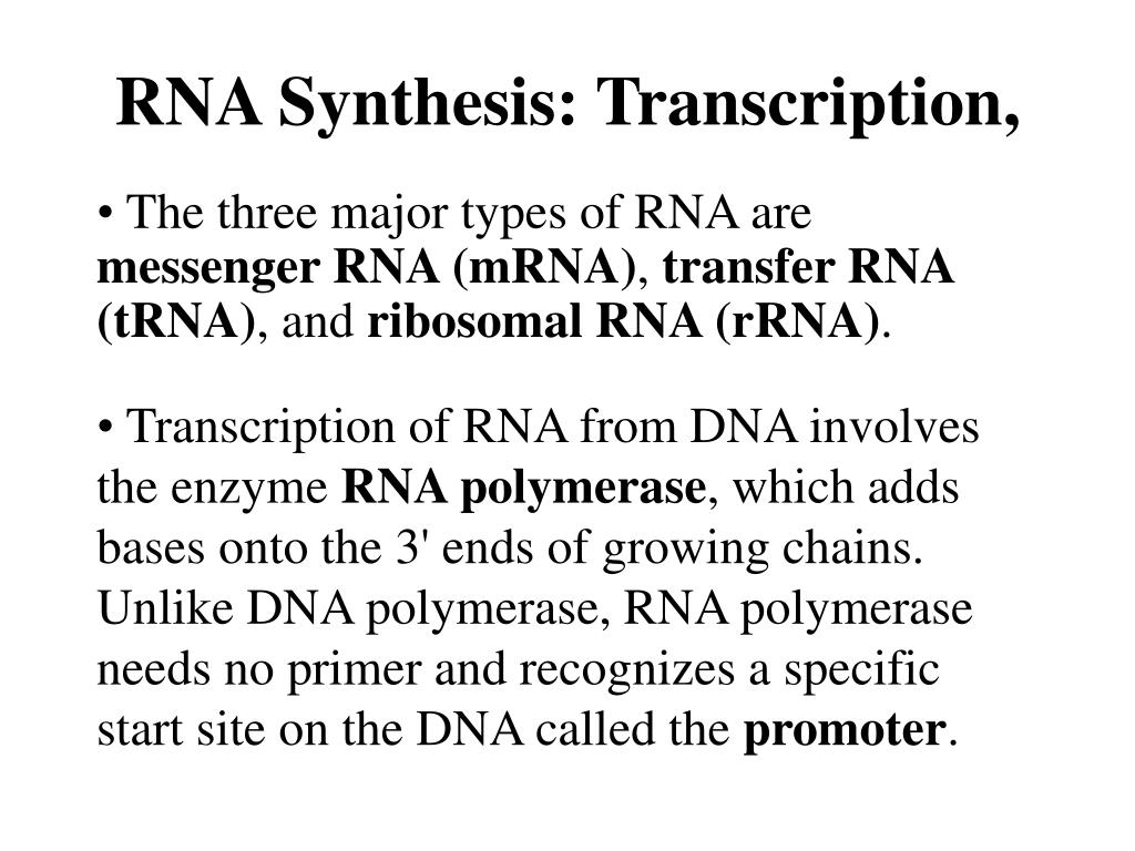RNA Synthesis: Transcription,