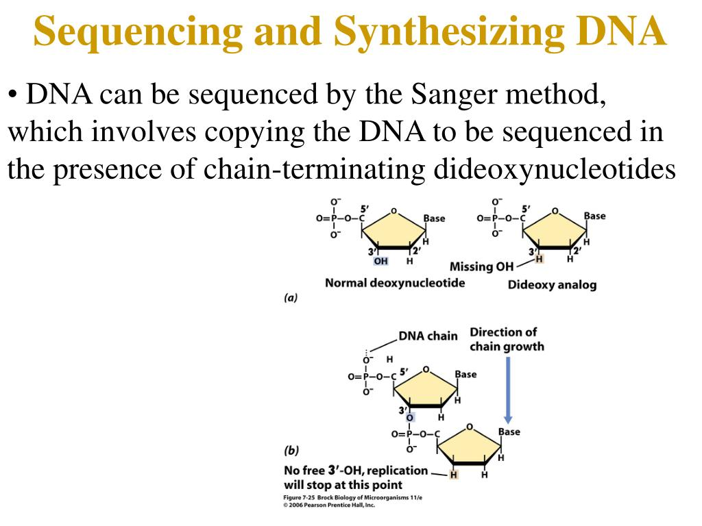 Sequencing and Synthesizing DNA