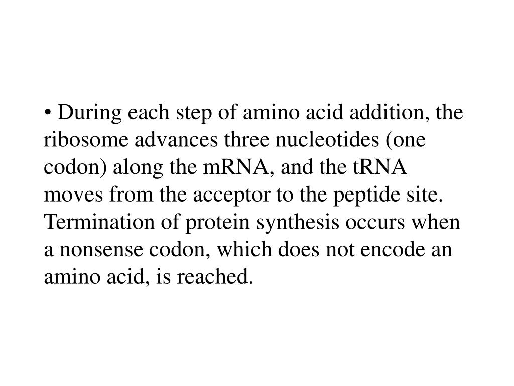During each step of amino acid addition, the ribosome advances three nucleotides (one codon) along the mRNA, and the tRNA moves from the acceptor to the peptide site. Termination of protein synthesis occurs when a nonsense codon, which does not encode an amino acid, is reached.