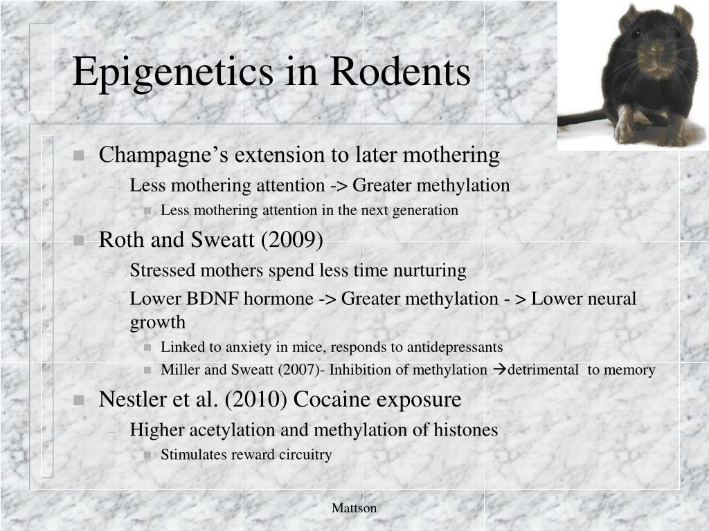 Epigenetics in Rodents