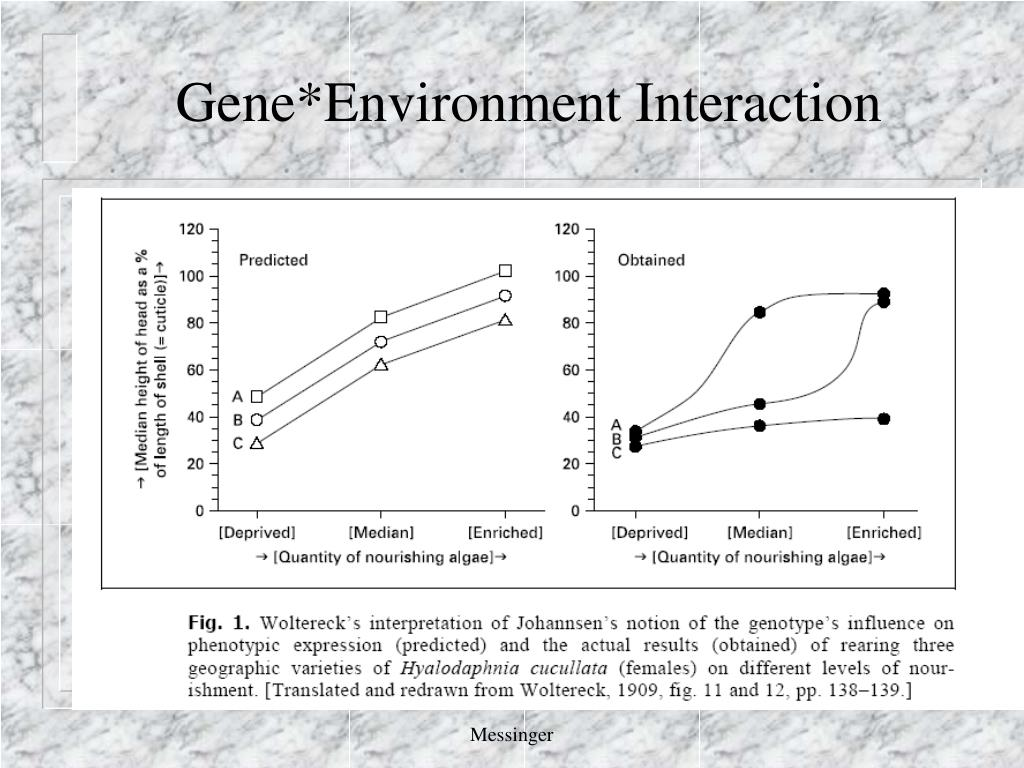 Gene*Environment Interaction