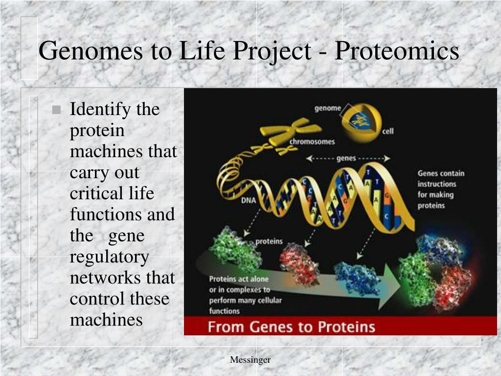 Genomes to Life Project - Proteomics
