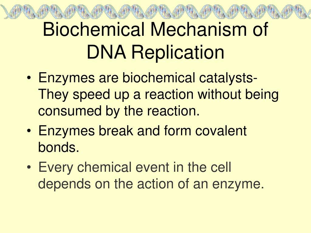 Biochemical Mechanism of DNA Replication