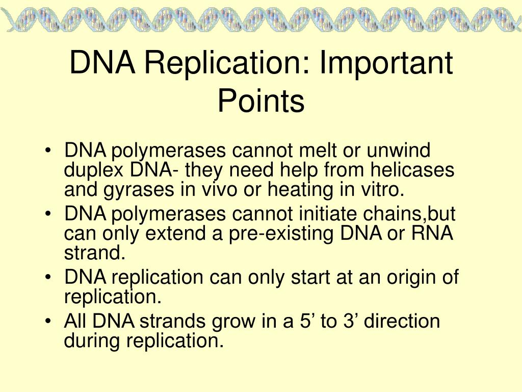 DNA Replication: Important Points