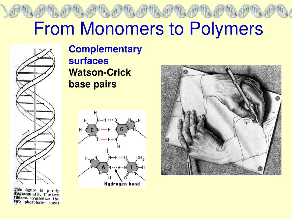 From Monomers to Polymers