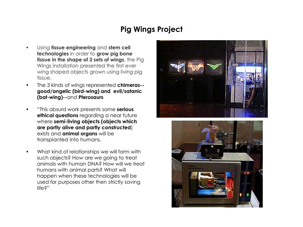 Pig Wings Project