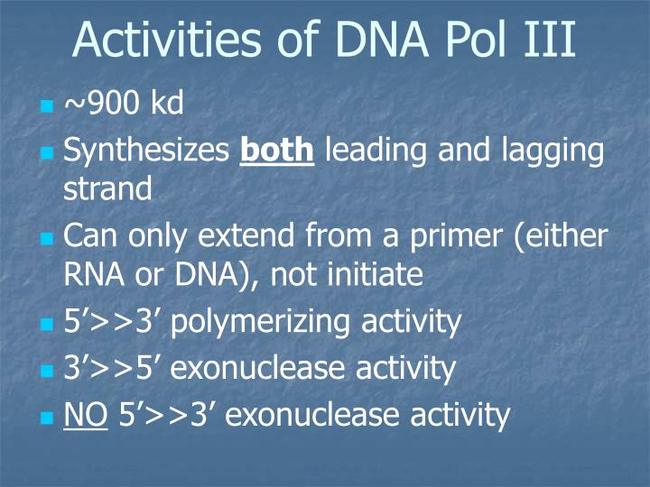Activities of DNA Pol III
