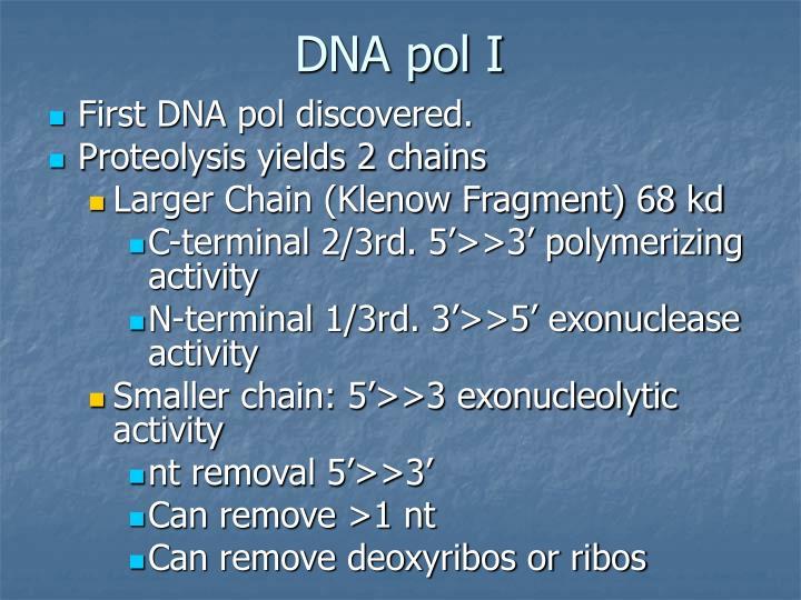 DNA pol I