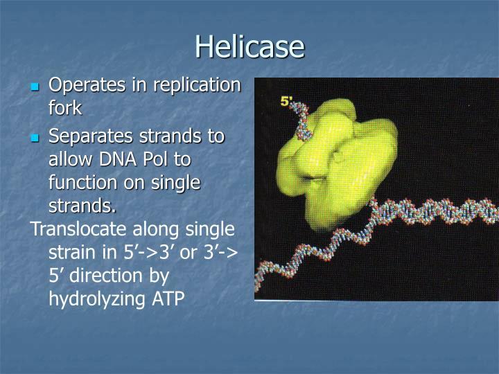 Helicase