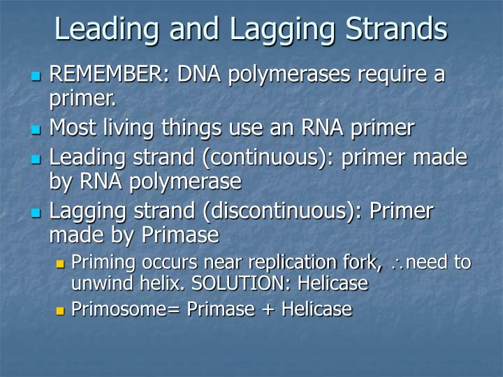 Leading and Lagging Strands