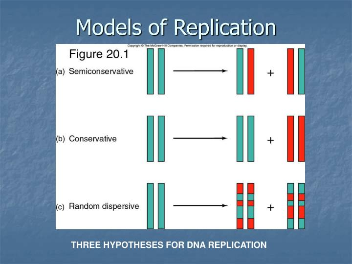 Models of Replication