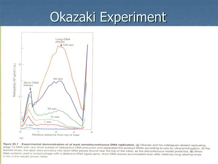 Okazaki Experiment