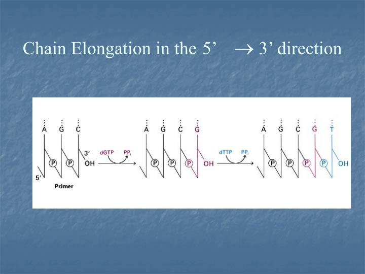 Chain Elongation in the
