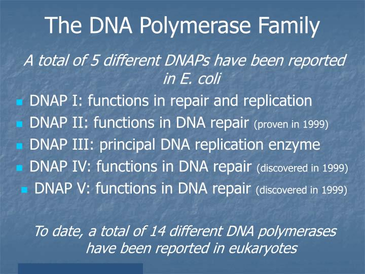 The DNA Polymerase Family