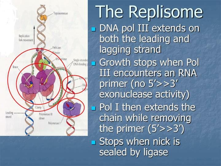The Replisome