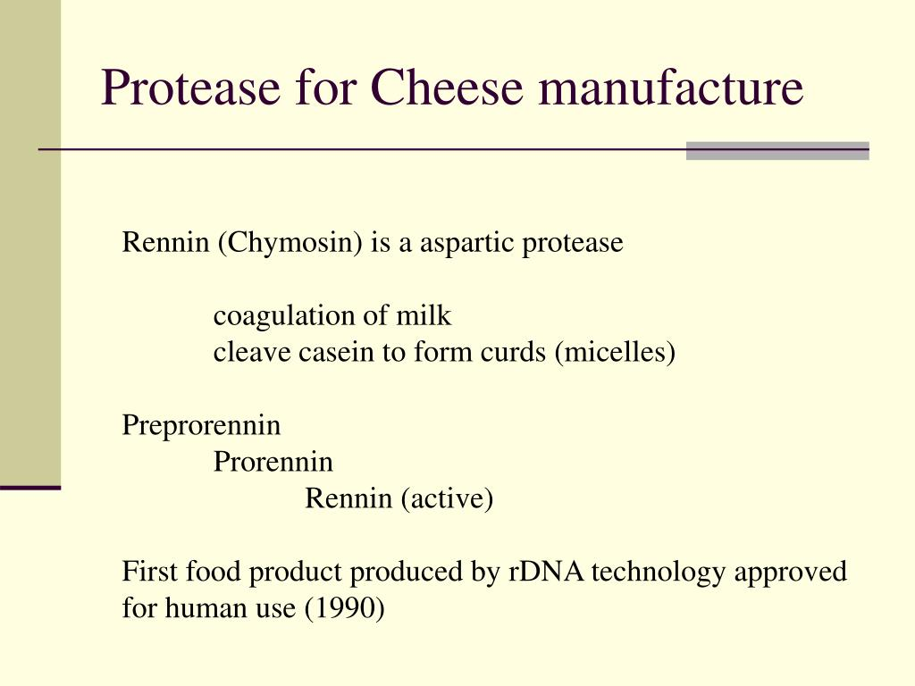 Protease for Cheese manufacture