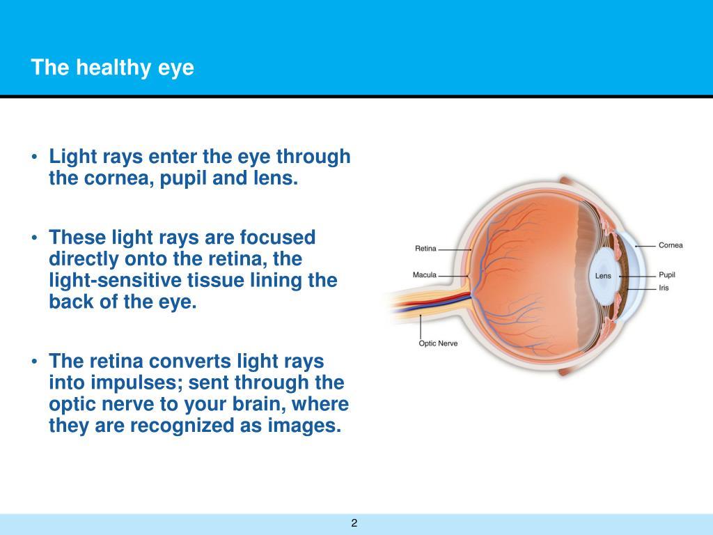The healthy eye