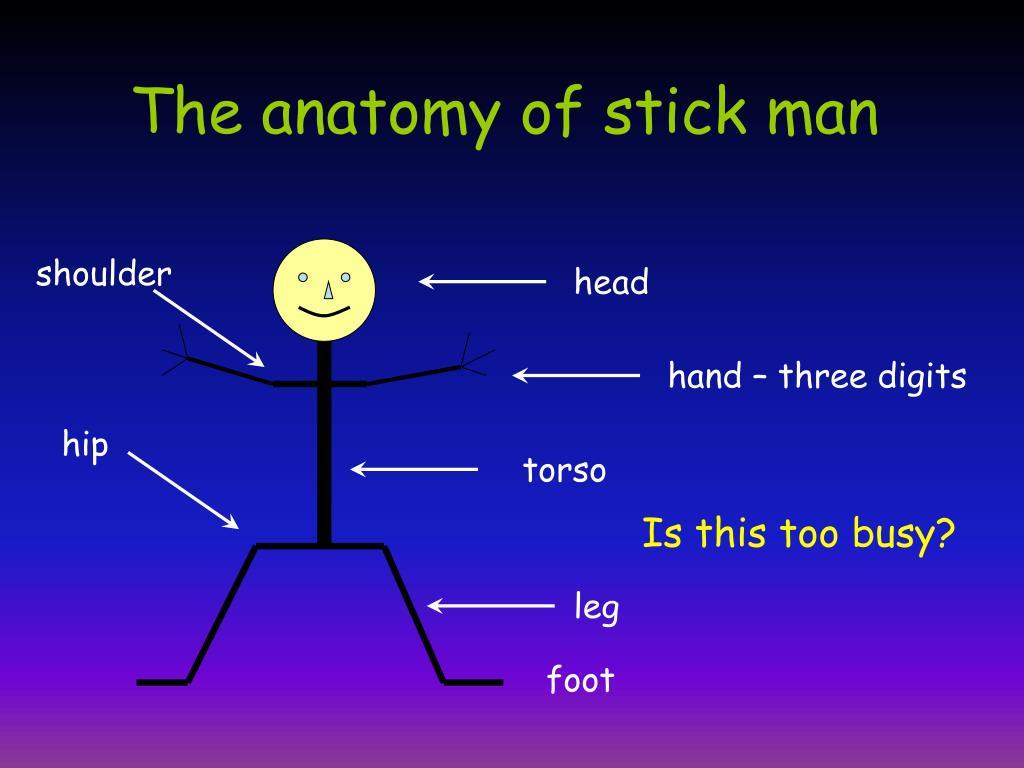 The anatomy of stick man