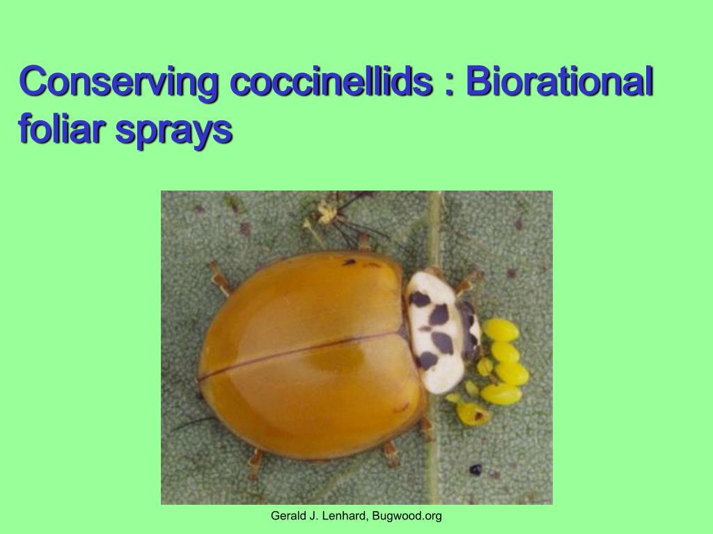 Conserving coccinellids