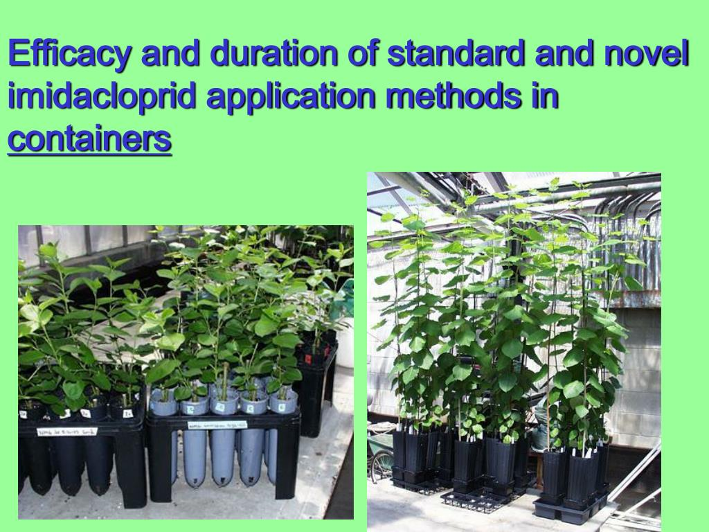 Efficacy and duration of standard and novel imidacloprid application methods in