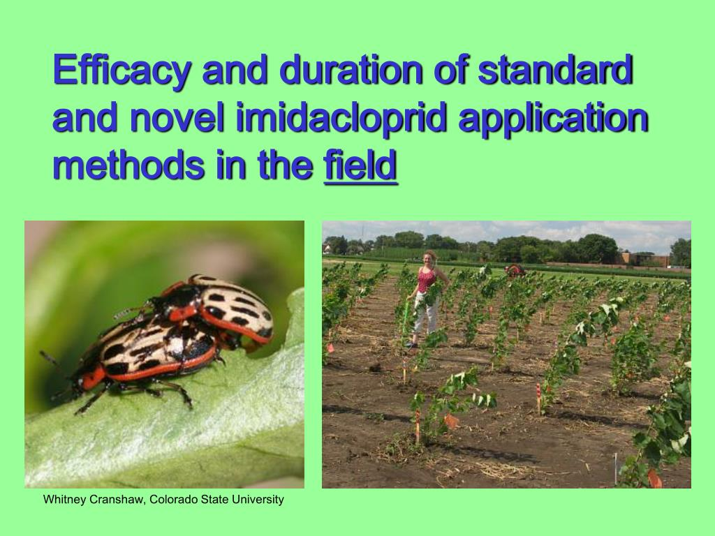 Efficacy and duration of standard and novel imidacloprid application methods in the