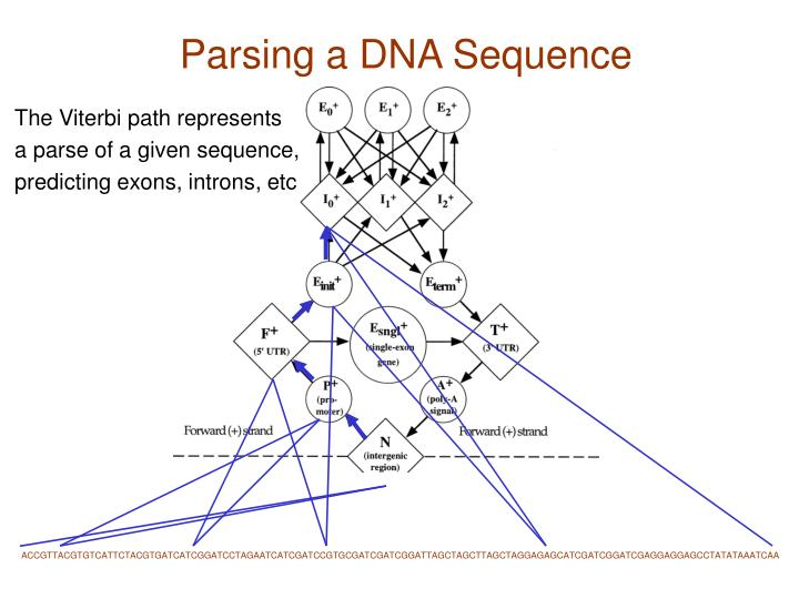 Parsing a DNA Sequence