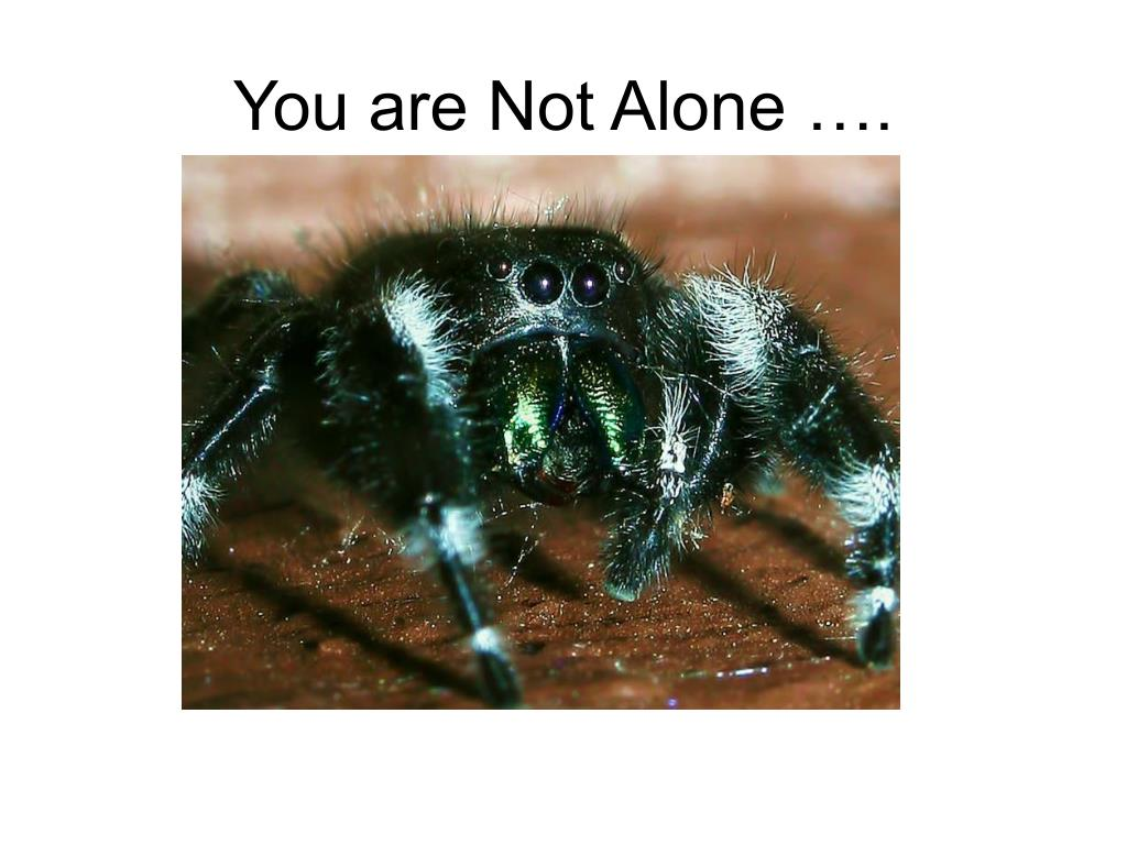 You are Not Alone ….