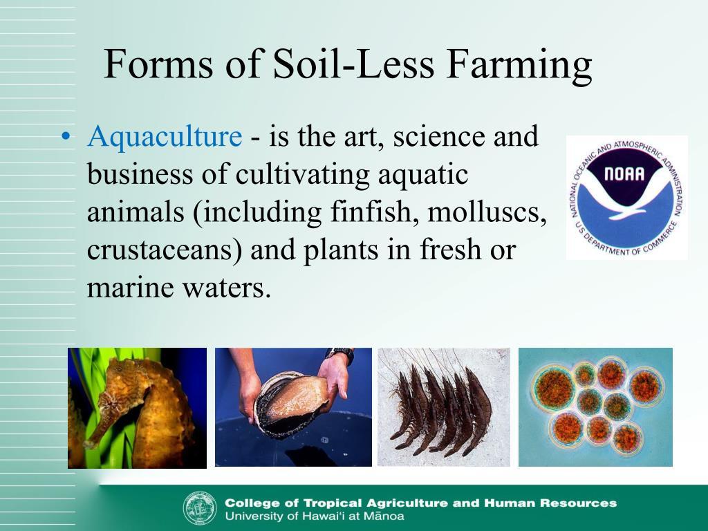 Forms of Soil-Less Farming