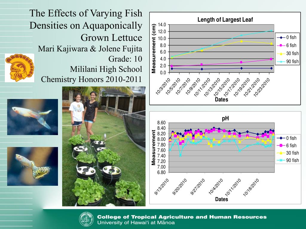 The Effects of Varying Fish Densities on Aquaponically Grown Lettuce