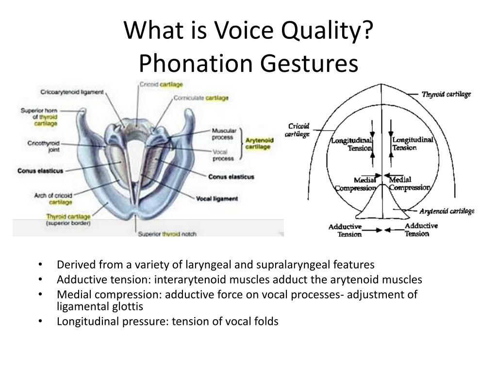 What is Voice Quality?