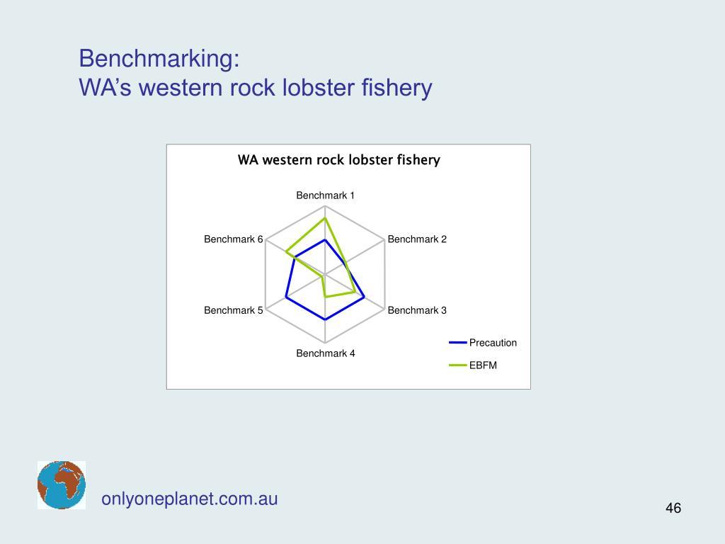 WA western rock lobster fishery