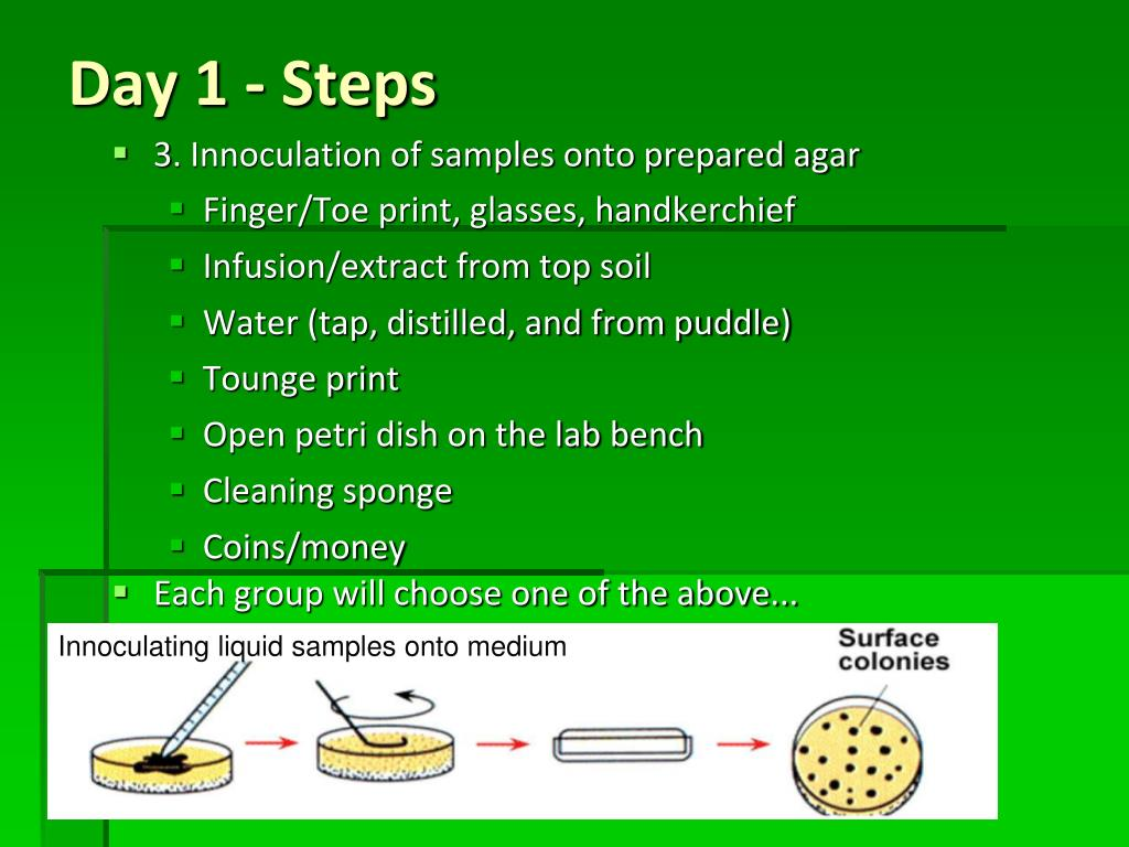 3. Innoculation of samples onto prepared agar